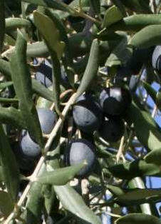 cv colombaia p