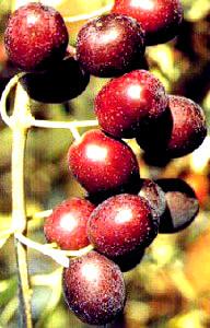 cv dolce di Rossano